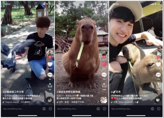 TikTok携手台湾野生动物园助力动物保护
